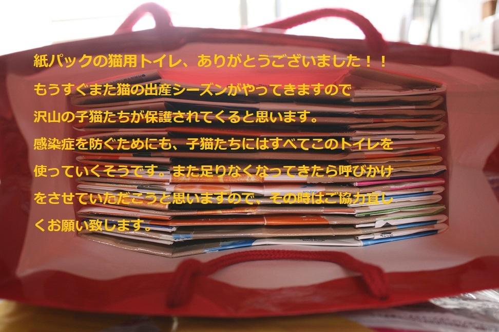 【猫・移動先募集】センター(支所)収容(2/3訪問)_f0242002_22522021.jpg
