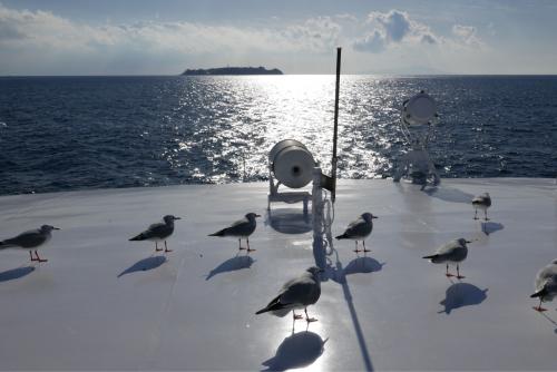 海界の村を歩く 太平洋 初島_d0147406_20070125.jpg