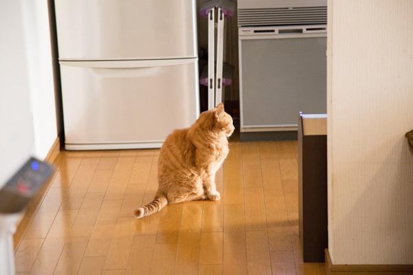 冷蔵庫の番人_d0355333_18252107.jpg