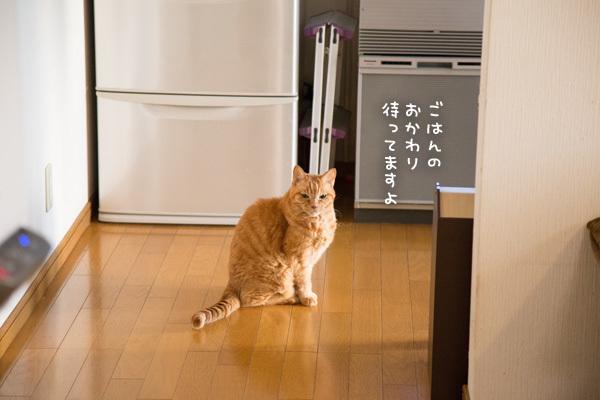 冷蔵庫の番人_d0355333_18252381.jpg
