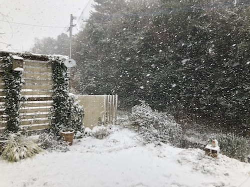 またも積雪 & 怪訝な顔のガーナさん_a0335560_18105345.jpg