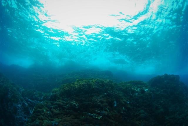 サンゴ調査も終わったし、そろそろ魚をじっくりと・・_a0138196_00061037.jpg