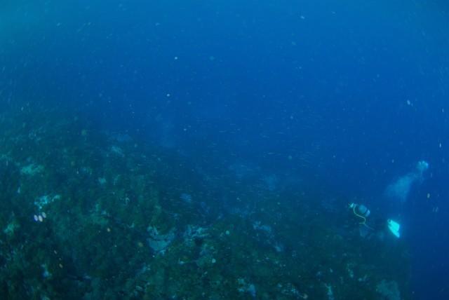 サンゴ調査も終わったし、そろそろ魚をじっくりと・・_a0138196_00110810.jpg