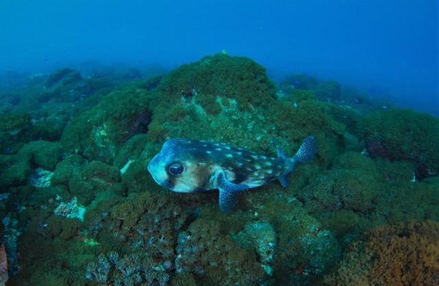 サンゴ調査も終わったし、そろそろ魚をじっくりと・・_a0138196_00572969.jpg