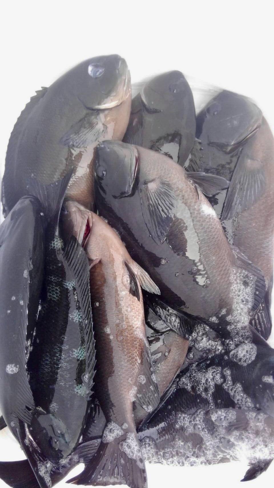 2月2日エボシ、水島二番でBIG尾長Σ(゚д゚lll)_d0114397_05455079.jpeg