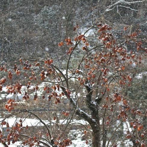 連日寒い日が続いています。_f0099102_12153447.jpg
