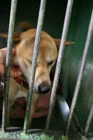【犬猫・移動先募集】センター(支所)収容(2/17訪問)_f0242002_22451442.jpg