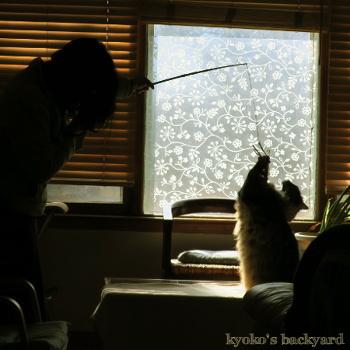Baileyと遊ぶ私_b0253205_06093175.jpg