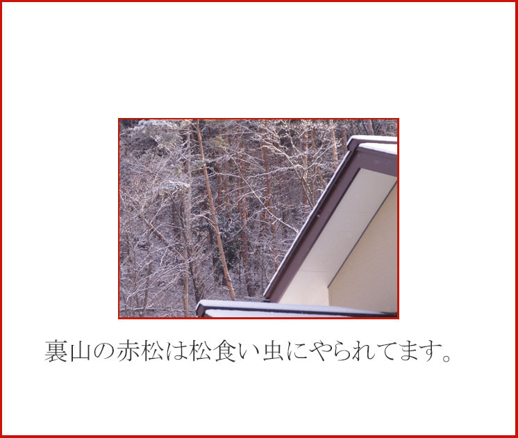 d0034980_20133596.jpg