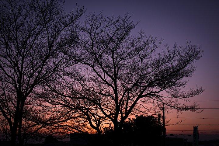 日没までの25分間の光蜥蜴_d0353489_11175525.jpg