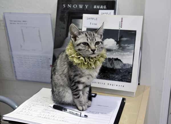 写真展「窓」・招き猫_f0173596_16390412.jpg