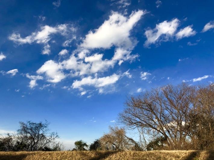 今日の多摩川_a0103940_17454018.jpeg