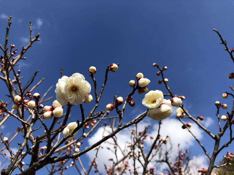 春の気配_e0053660_12045786.jpg