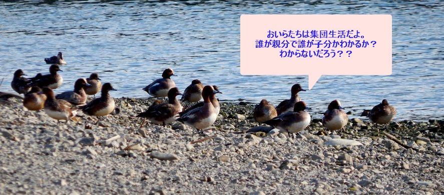 b0352112_14384126.jpg