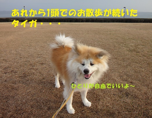 f0121712_23105031.jpg