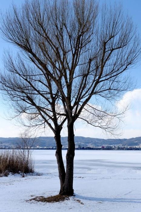 諏訪湖の御神渡り_c0330563_21510581.jpg