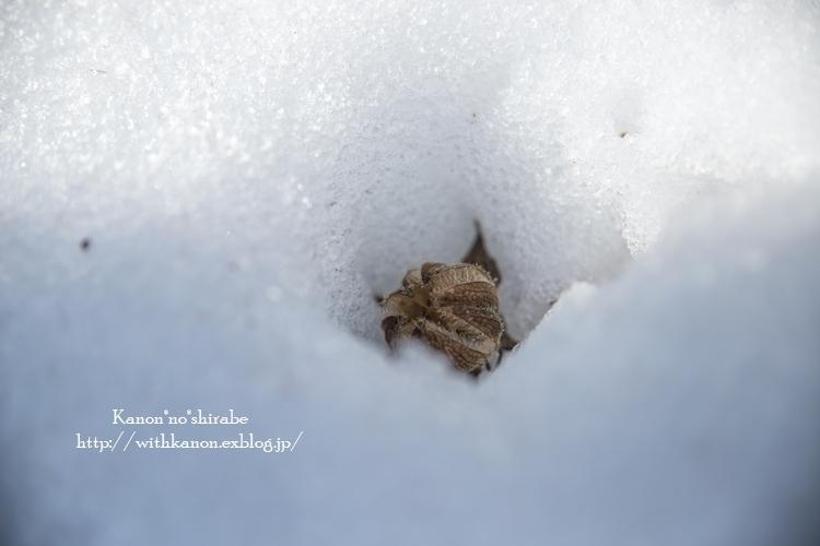 雪国へ_d0148187_21304115.jpg