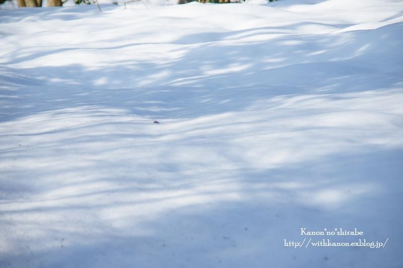 雪国へ_d0148187_21304770.jpg