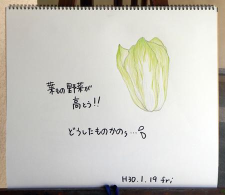 白菜、キャベツ、、、、_b0364195_12271935.jpg