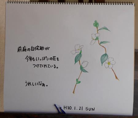 咲いてる_b0364195_12285135.jpg