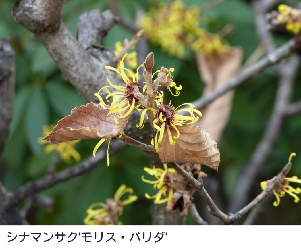 久屋大通庭園フラリエさんより_f0373339_1112762.jpg
