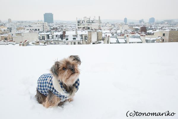 パリの大雪。バブー家の特別な雪さんぽ?!_c0024345_21310108.jpg