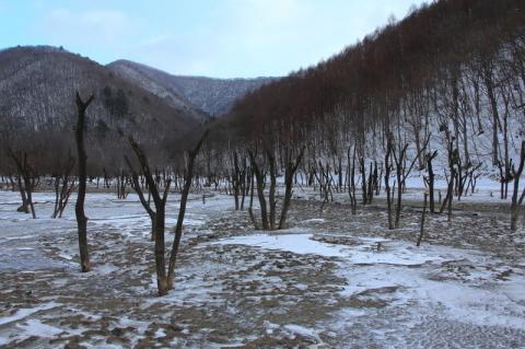 今年は、やはり寒いのだろう。_f0075075_17092919.jpg