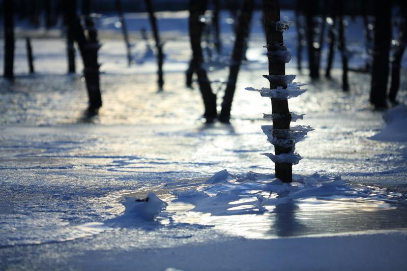 今年は、やはり寒いのだろう。_f0075075_17114367.jpg