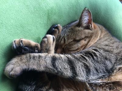 猫のお昼寝_d0214221_07455833.jpg