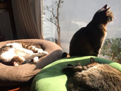 猫のお昼寝_d0214221_07492343.jpg