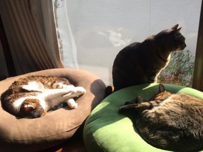 猫のお昼寝_d0214221_07502841.jpg