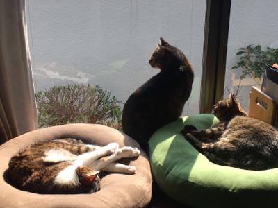 猫のお昼寝_d0214221_07510233.jpg