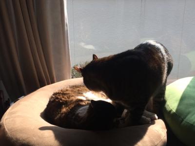 猫のお昼寝_d0214221_07524918.jpg