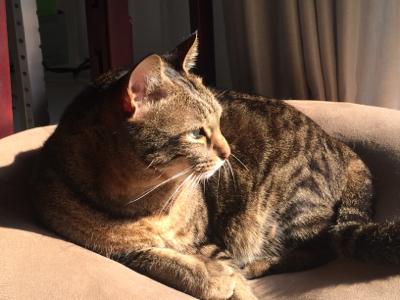 猫のお昼寝_d0214221_07565363.jpg