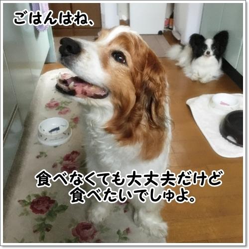 d0013149_00464304.jpg