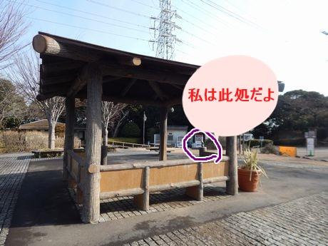 b0352112_1545186.jpg
