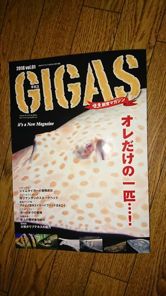"New Magazine ""GIGAS""_f0253407_15502686.jpg"