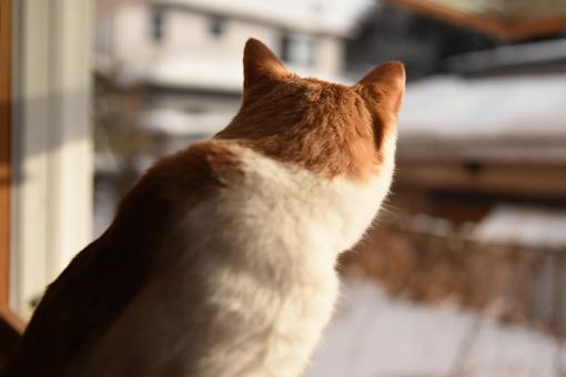 窓辺の内緒_b0259218_03391199.jpg