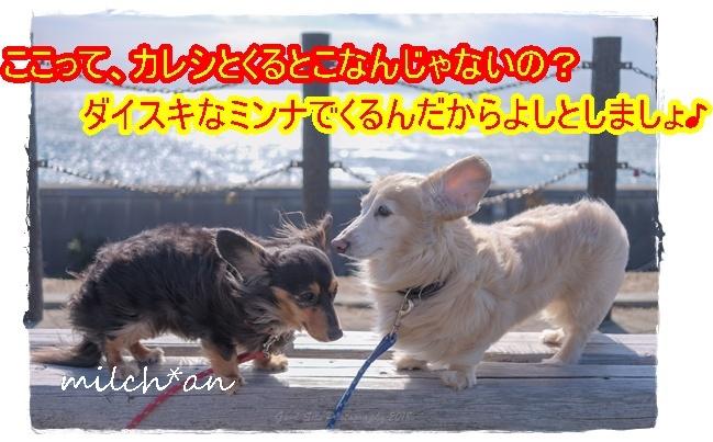 b0115642_22031589.jpg