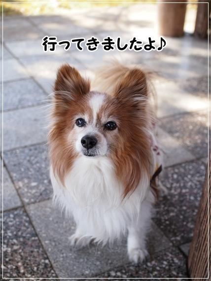 d0013149_00100506.jpg