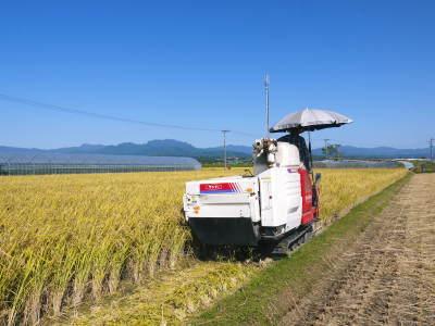 熊本県菊池市七城町『砂田のこだわりれんげ米』 れんげの発芽 2020年も変わらぬ栽培方法です!_a0254656_19190973.jpg