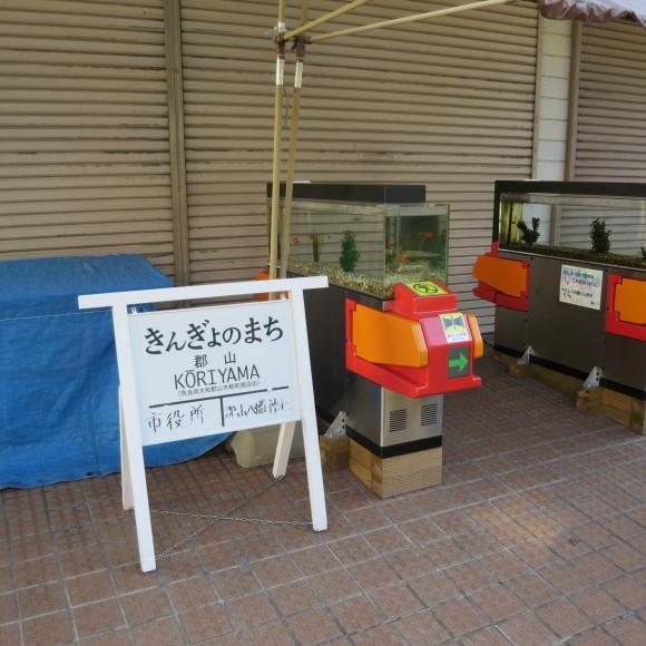 猫窓と金魚、そのまま 大和郡山市にて_c0001670_16520251.jpg