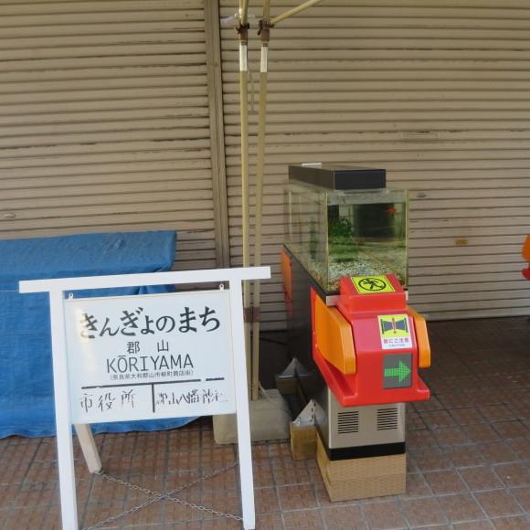 猫窓と金魚、そのまま 大和郡山市にて_c0001670_16523513.jpg