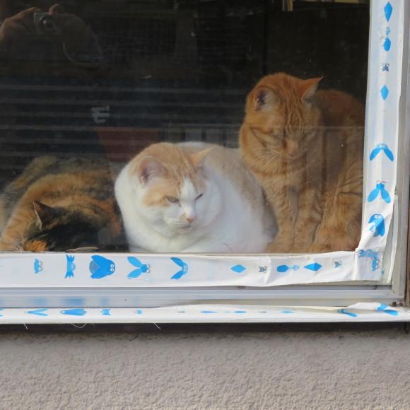 猫窓と金魚、そのまま 大和郡山市にて_c0001670_17050562.jpg