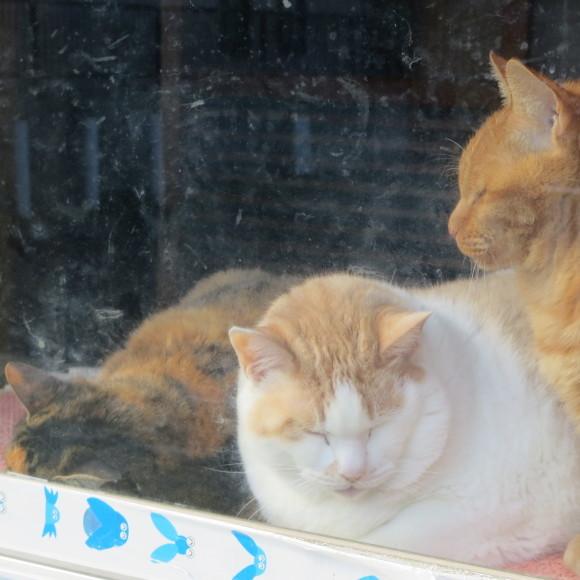 猫窓と金魚、そのまま 大和郡山市にて_c0001670_17050600.jpg