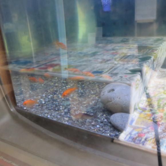 猫窓と金魚、そのまま 大和郡山市にて_c0001670_17051533.jpg