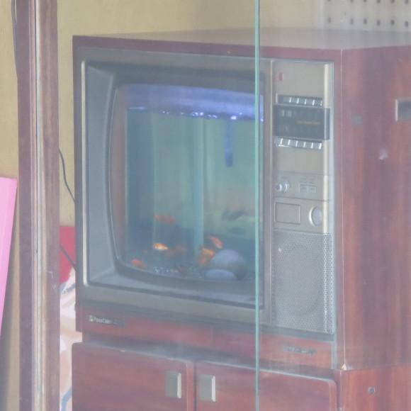 猫窓と金魚、そのまま 大和郡山市にて_c0001670_17081630.jpg