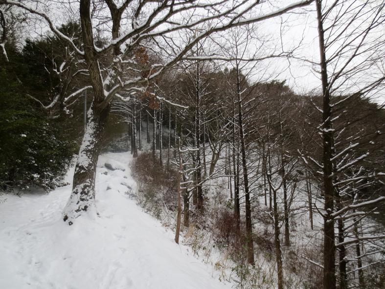 ■「犬は歓び庭駆け回り…」風の積雪油山行_d0190217_17472996.jpg