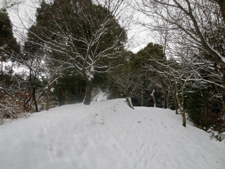 ■「犬は歓び庭駆け回り…」風の積雪油山行_d0190217_17474746.jpg