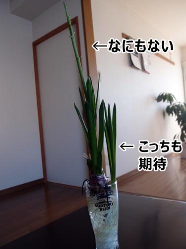 c0354352_15230299.jpg